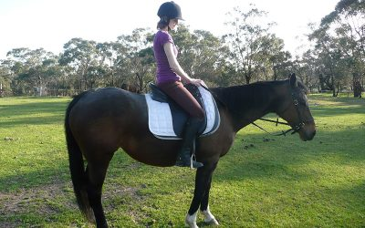 Help – I Have No Time For Horses!